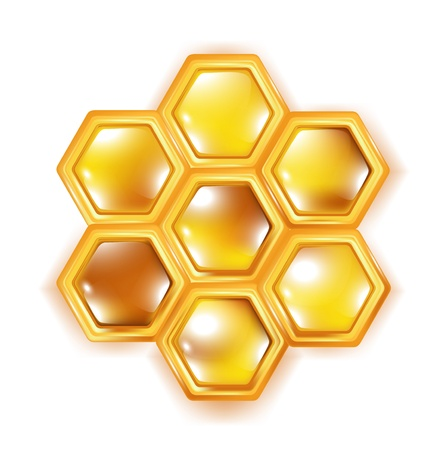 honey bee: honeycomb isolated on white bavkground Illustration