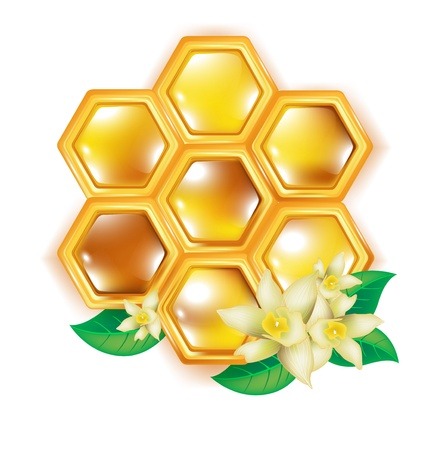 honey cell: honeycomb with flowers isolated on white Illustration