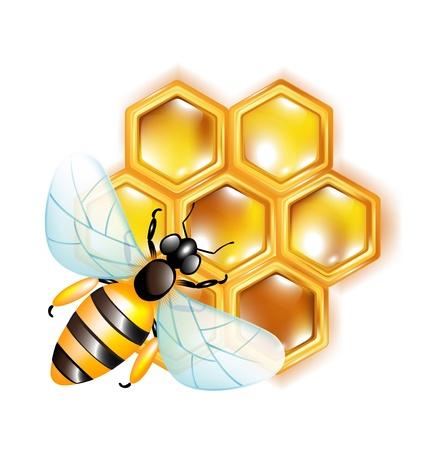 honeyed: bee on honeycomb isolated on white