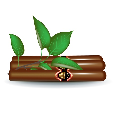 havana cigar: three cigars with fresh leaves isolated