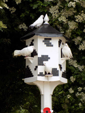roosting: Doves roosting in a dove cote. Stock Photo