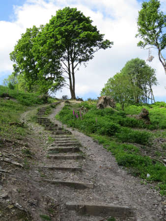 wooded path: Path through a wooded area of the English countryside.