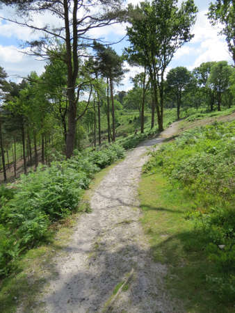 Path through a wooded area of the English countryside.