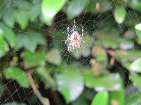 arthropods: Spider on its web awaiting its prey.