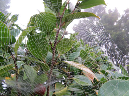 spiders web: Early morning dew on a spiders web.