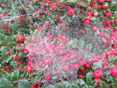 intricate: Intricate spiders web constructed between leaves of a bush. Stock Photo