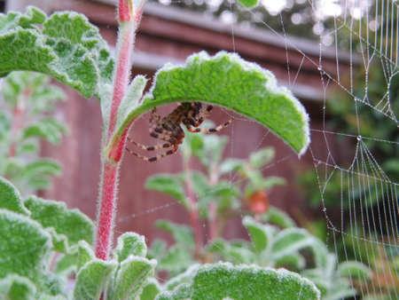 arthropod: spider web,web,gossamer,net,intricate,trap,nobody