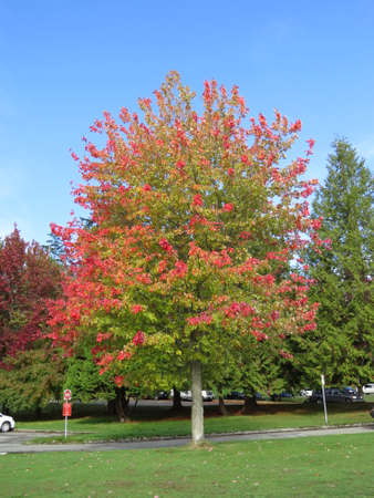 stanley: Fall colours in Stanley Park in Vancouver, Canada. Stock Photo