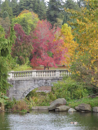 stanley: Fall colours in Stanley Park in Vancouver, Canada
