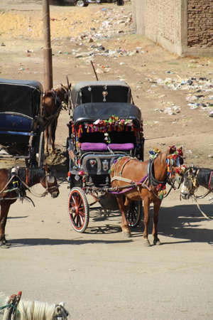 tourists stop: Edfu, Egypt - November 30, 2016: Horse and carriages waiting by the banks of the Nile in the town of Edfu. These take tourists from the cruise boats which stop here to a nearby temple. Editorial