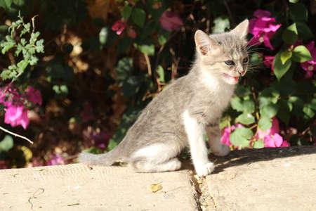 sunning: Young kitten sunning itself on a wall.