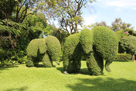 Bush cut into the shape of an elephant in a park in Bangkok, Thailand. Stock Photo