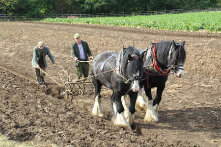 Newcastle, UK - 22 September, 2018: Men demonstrating ploughing a field without the use of a tractor. Horses were used in the UK for generations until the arrival of tractors on farms.