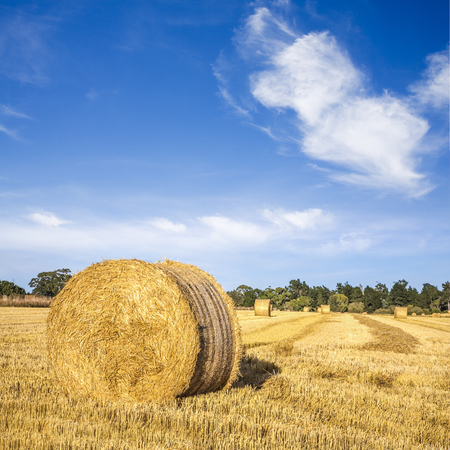 Hay bales under a cerulean blue sky means summer in Canterbury, New Zealand. Stock fotó