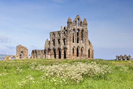 Whitby Abbey and Wildflowers