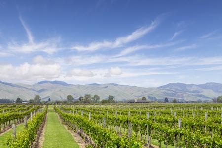 Marlborough Vineyard New Zealand 免版税图像