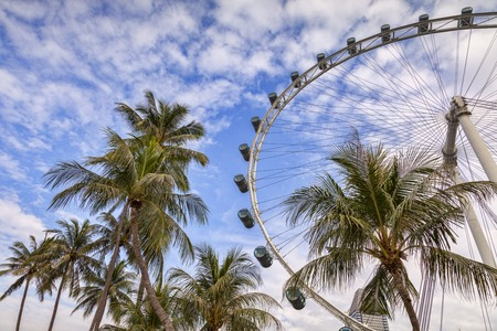 Singapore Flyer and Palms