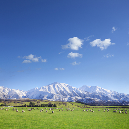 New Zealand Farmland