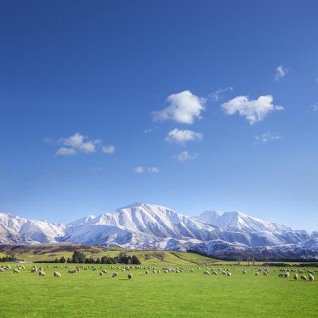 Tierras de cultivo de Nueva Zelanda Foto de archivo - 106918729