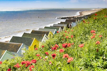 Southwold, Suffolk, UK, Red Poppies above the Beach Huts on the Shore