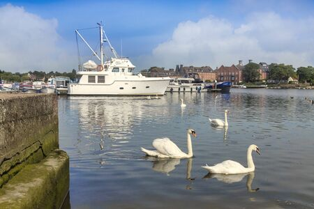 Oulton Broad, Norfolk, with Swans and Boats Archivio Fotografico - 137784111