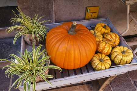 A display of a pumpkin, gourds and spider plants, for sale outside a shop in Bruges, Belgium. Archivio Fotografico - 139748613