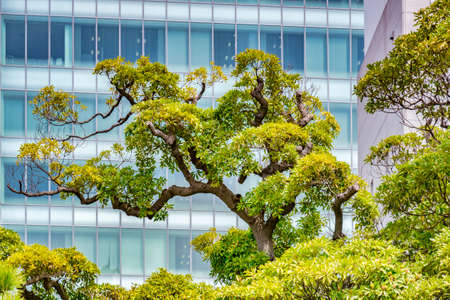 Topiary Tree and Modern Building in Tokyo City Centre Japan 新闻类图片