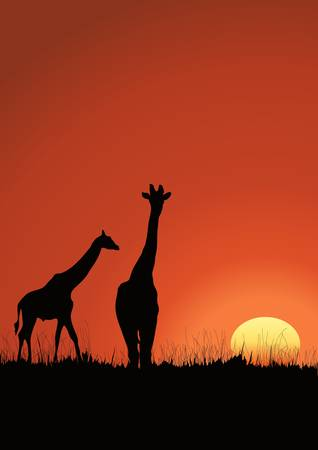 Giraffes' black silhouette on the sunset in Africa Vector