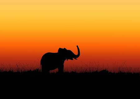 Elephants black silhouette on the sunset in Africa Vector