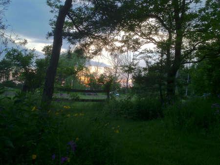 木とは対照的空の色は、この夜だった壮大なだと思った