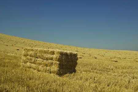 wheat harvest: Jule 2013, il raccolto di grano, Torrelaguna - Madrid Archivio Fotografico