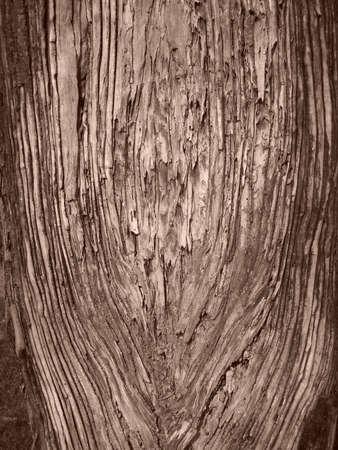 gnarled: Truee tronco retorcido
