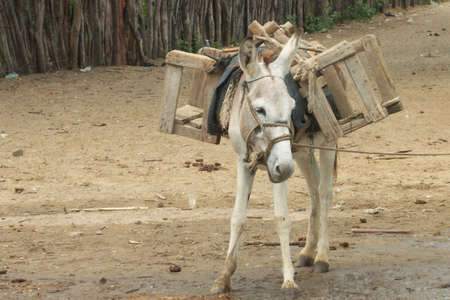 Peru donkey Banco de Imagens