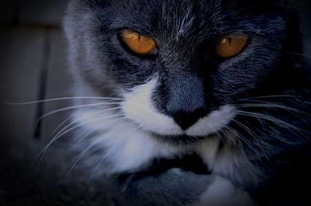 vignette: Sinister looking cat with vignette.