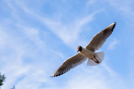 Single seagull flying in a sky as a background Banco de Imagens - 104214678