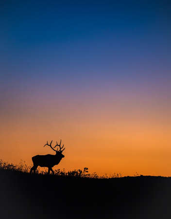 Elk Silhouette on top of a Mountain