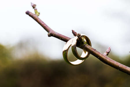 2 Wedding bands being displayed on a branch of tree before the ceremony. The are no leaves and the background is in bokeh 写真素材
