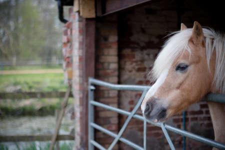 Portrait of a farmyard horse found in the Suffolk countryside Banco de Imagens