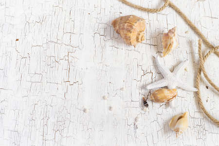 craquelure: Starfish, seashells and rope on a white background, space for text