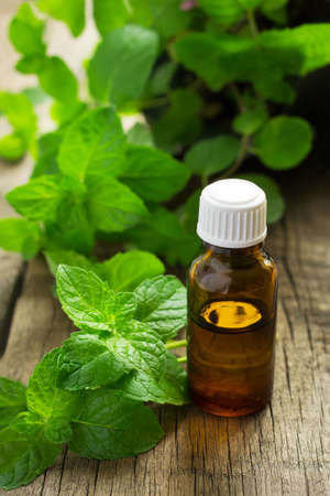 Essential oil of peppermint in a small bottle with fresh mint, selective focus Stock Photo