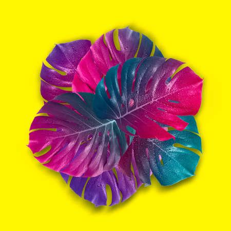 Hojas de monstruo degradado multicolor tropical. Surrealismo mínimo. Foto de archivo