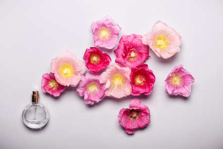 Womens perfume bottle and pink mallow flowers. Minimalism beauty concept