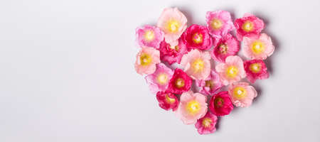 Heart of mallow flowers. Minimalism beauty, mothers Day or Valentines Day concept. Stock Photo