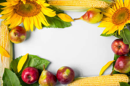Autumn background. frame made of sunflower, corn and pears. Harvest holiday concept