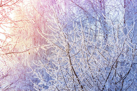Fairy Snow sunrise Trees. Winter cold sunny landscape. Stock Photo