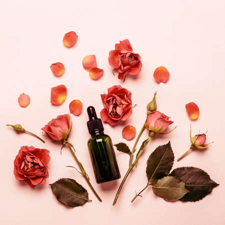 Essence rose oil, rosebuds and petals close-up. Aromatherapy Concept