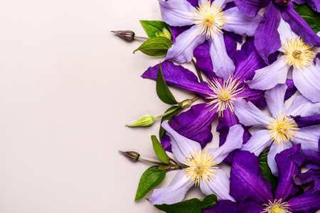 Creative layout made with Beautiful purple clematis flowers.