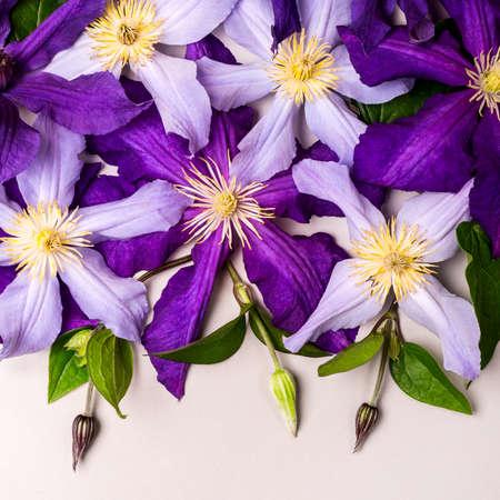 Beautiful purple clematis flowers and buds. Summer concept. Reklamní fotografie