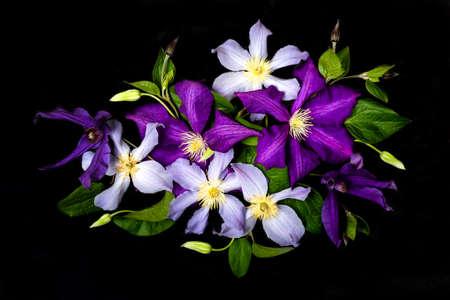 Beautiful purple flowers on black
