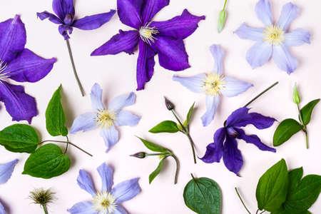 Creative layout made with violet flowers. Reklamní fotografie
